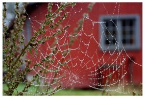 Spider web Close up by Snusmumrik