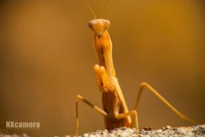 Mantis Series - 2 by NXcamera
