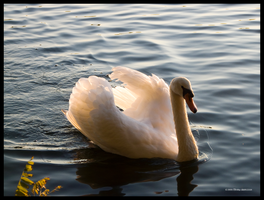 Sunset Painted Swan by Mogrianne