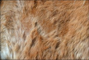 Horse Fur Texture2 by FrankAndCarySTOCK