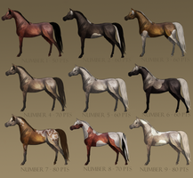 Adoptables - Arabians Horses. OPEN by x-crash