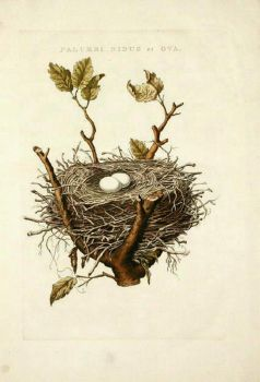 Nest Clipart by HauntingVisionsStock