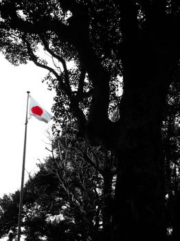 Japanese Flag and Trees Shadows by Lissou-photography