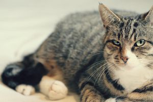 cat 14 by sisselPhotography