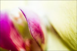 Orchid Leaves by db-photoblogDOTcom
