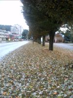 Can't See Sidewalk for Leaves by Bakageta-Koto
