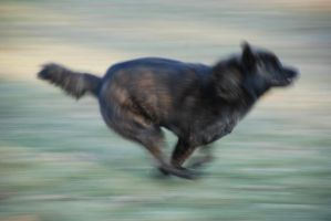 Black Dog Running Stock 4 by lee-mare
