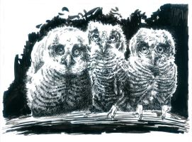 Owls by bwcopy
