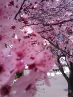 Cherry Blossom pt 1 by luci-alucard