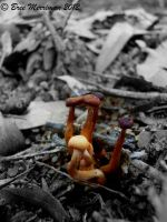 Fungus III by BreeSpawn