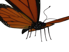 Butterfly Model 3 by Xanatos4