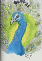 Peacock by Savannah-lion-1