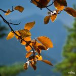Storm and automn by rdalpes