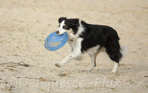 Frisbee in the Sand 2 by Deliquesce-Flux
