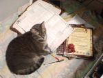 Dungeons and Dragons Cat 1 by orcbruto