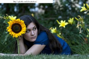 Sunflower in July by eyefeather-stock