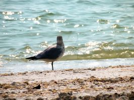 Bird by the water by geshorty34