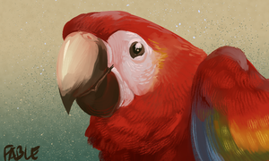 Macaw by FablePaint