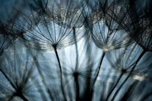 Inside Dandelion by DREAMCA7CHER