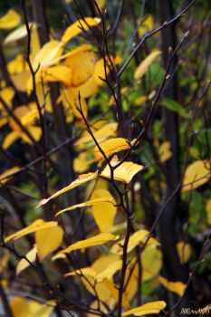 Fall Colors 012 by Doumanis