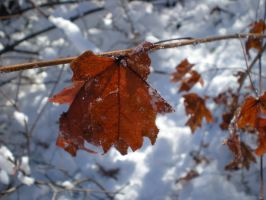Frosty leaves by dancingmelons97