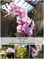 Orchid Pack 3 - Unrestricted by Cat-in-the-Stock