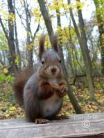 Squirrel 148 by Cundrie-la-Surziere