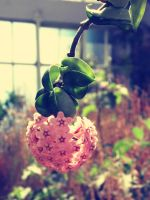 blossom by lauraturner27