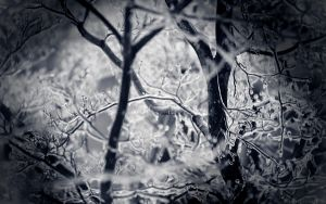 Frozen Tree by nprkr