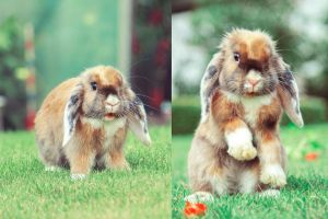 Funny Bunny by I-Heart-Photo