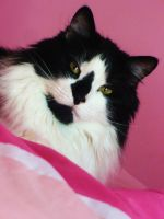 Oreo in Pink by Oxis