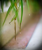 Water Droplets by achraf2022
