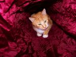 .:A Trippy Crawl Through The Kitty Tunnel:. by Shadouge4eva