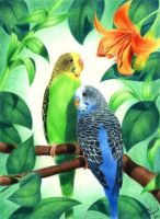 Cute Budgies by Spikylein
