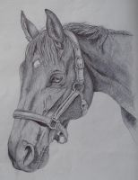 Horse Portrait Pen by lucx91
