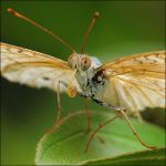 Mangrove Butterflies V by log1t3ch