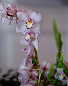 Orchids in Twilight by tleach0608