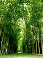 green tunnel by andr33aa