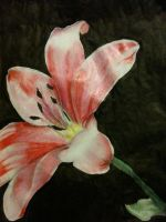 Flower life drawing by scarlet-light