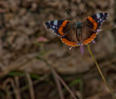 Butterfly by forgottenson1