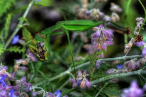 Praying Mantis vs The Bee by ZachSpradlin