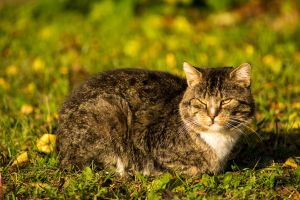 alley cat by fot-ciosek