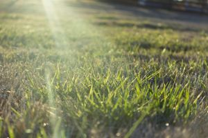 Glowing Grass by pureoptic