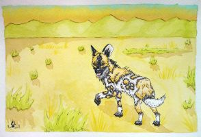African Painted Dog by whitew3r3wolf