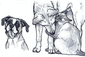 Dog and Cat sketches by silvercrossfox