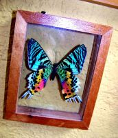rainbow chromatic looking butterfly by mandykat