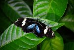 Black with Blue painted wings by tkguess