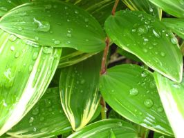 green leaf with water drops by sidneyj06