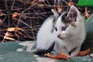 Autumn Kittens V by Alvia