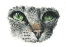 Cateye (Reupload) by Tiefenbacher